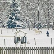 Horse, person, trees, and play structure in the snow from a distance