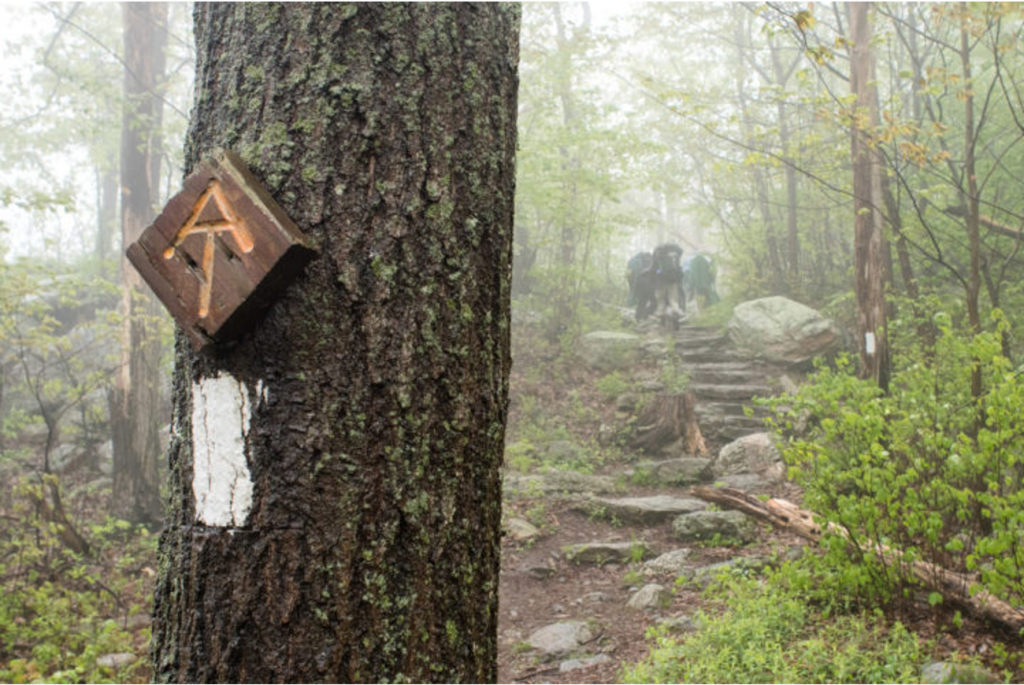 """""""AT"""" Appalachian Trail sign attached to tree in forest, with hikers in the background"""