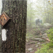 """AT"" Appalachian Trail sign attached to tree in forest, with hikers in the background"